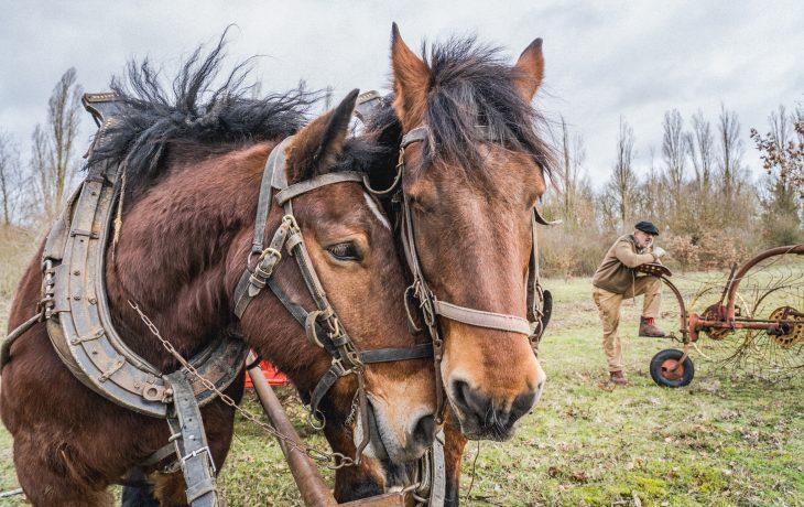 Des chevaux au service de la compensation écologique d'Issou