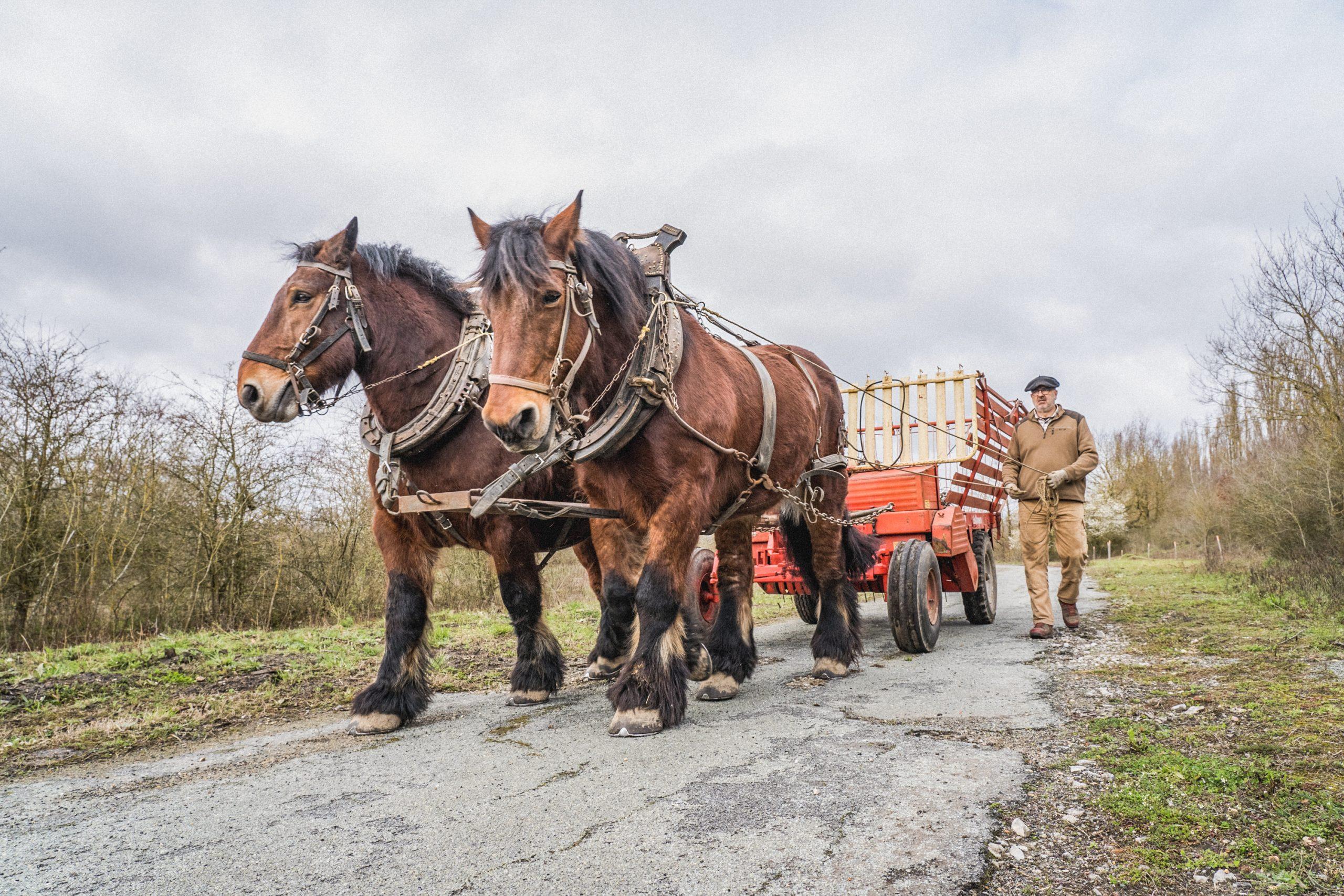 2 chevaux et le personnel