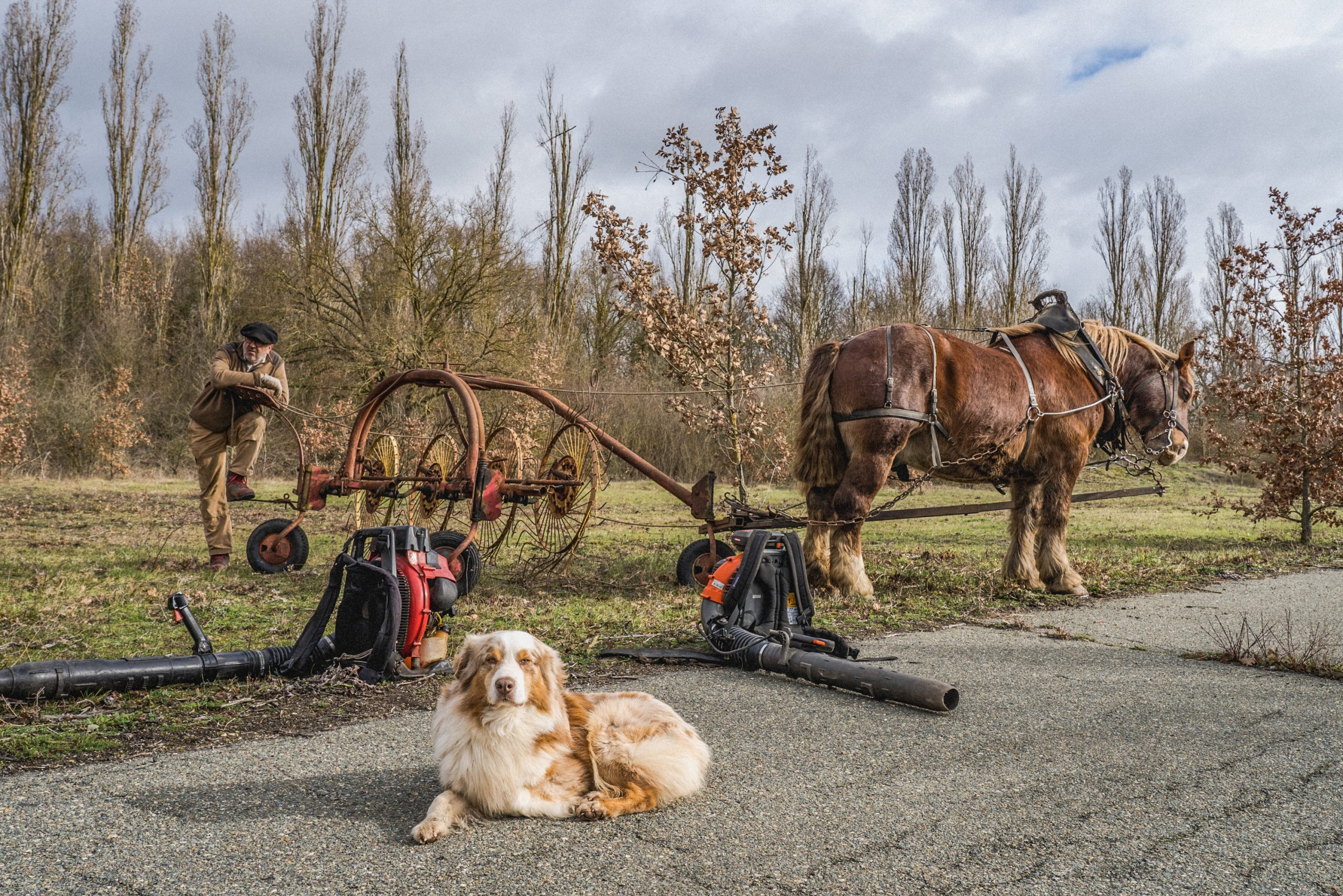 Les chevaux et le chien du personnel